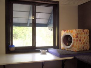 Aragon Cattery - Apartment